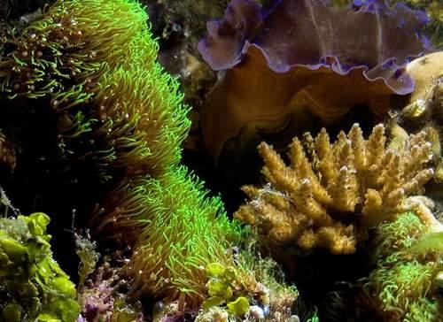 marine aquarium (saltwater)